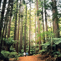 redwood_forest_with_people